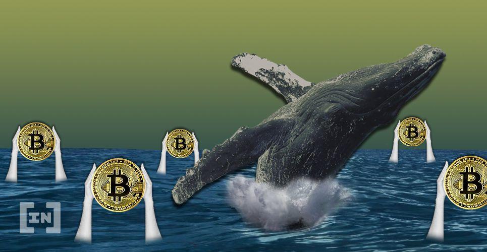 Bitcoin BTC Whale